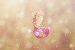 一只美丽的蝴蝶的梦想的照片 免版税图库摄影