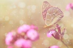 一只美丽的蝴蝶的梦想的照片 图库摄影