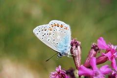 一只美妙的蝴蝶的特写镜头 库存照片