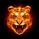 一只老虎的头在火焰的 库存照片