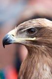 一只老鹰的题头的特写镜头纵向在配置文件的 免版税库存照片