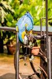 一只聪明的金刚鹦鹉练习举重 库存图片