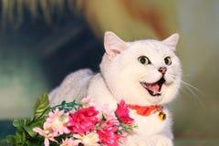 一只肥胖宠物猫 免版税库存照片