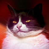 一只营养充足,困猫的画象 库存照片