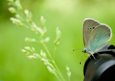 一只蓝色蝴蝶坐在被弄脏的背景的一个黑暗的三脚架关闭视图 库存图片