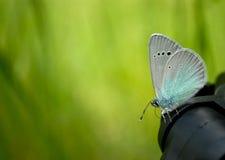 一只蓝色蝴蝶坐在被弄脏的背景的一个黑暗的三脚架关闭视图 免版税图库摄影