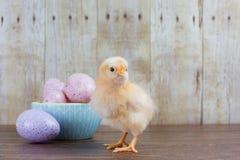 一只蓬松小鸡在一碗在土气bac的复活节彩蛋附近站立 图库摄影