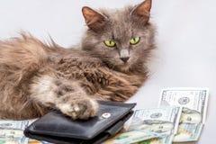 一只蓬松猫在钱包和美元附近说谎 a的标志 图库摄影