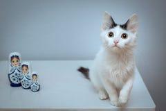 一只蓬松白色小猫坐与三matryoshkas的一把椅子 免版税库存图片