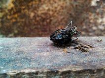 一只蚂蚁 免版税库存图片