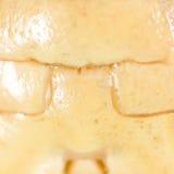 一只蚂蚱的壳作为背景 免版税图库摄影