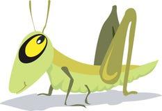 一只蚂蚱 库存图片