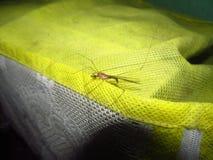 一只蚊子 免版税库存照片
