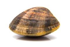 一只蛤蜊 图库摄影