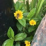 一只蜂 免版税图库摄影