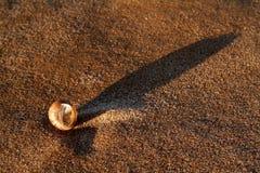 一只蜗牛的水槽在沙子的 免版税库存图片
