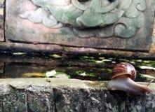 一只蜗牛 免版税图库摄影
