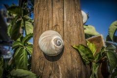 一只蜗牛 图库摄影