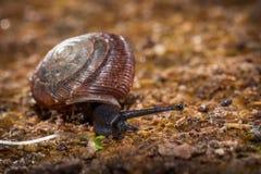 一只蜗牛 库存照片