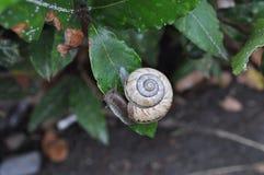 一只蜗牛 库存图片