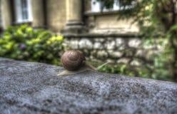 一只蜗牛 免版税库存图片