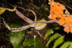 一只蜘蛛在森林里 库存图片