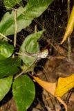 一只蜘蛛在森林里 免版税库存照片