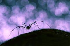 一只蜘蛛的剪影在黑和蓝色背景的 库存照片