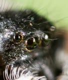 一只蜘蛛的画象本质上 2009朵超级花宏观的夏天 库存图片
