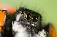 一只蜘蛛的画象本质上 2009朵超级花宏观的夏天 免版税库存照片