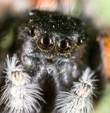 一只蜘蛛的画象本质上 2009朵超级花宏观的夏天 库存照片