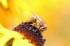 一只蜜蜂在工作 免版税库存图片