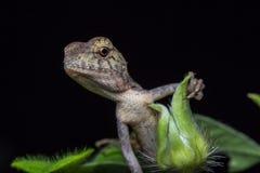 一只蜥蜴 免版税图库摄影
