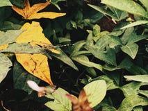 一只蜻蜓在亚洲庭院里 库存图片