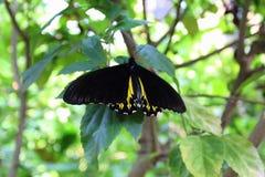 一只蝴蝶的接近的图象在分支的 图库摄影