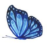 一只蝴蝶的水彩图象在白色背景的 库存照片