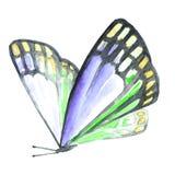 一只蝴蝶的水彩图象在白色背景的 库存图片