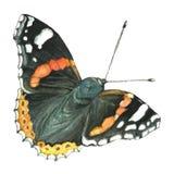 一只蝴蝶的水彩图象在白色背景的 免版税库存照片