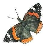 一只蝴蝶的水彩图象在白色背景的 免版税图库摄影