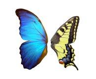 一只蝴蝶的翼在白色的 库存照片