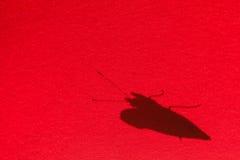 一只蝴蝶的阴影在一把红色遮阳伞的 免版税图库摄影