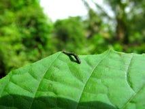 一只蠕虫 库存图片