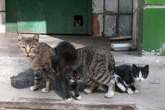 一只街道无家可归的猫和两只黑小猫,在背景中第三只小猫看在孔外面在墙壁 免版税库存照片