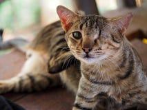 一只被注视的猫 图库摄影