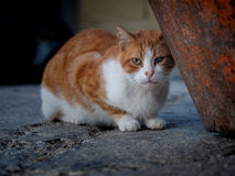 一只被注视的街道猫 免版税库存照片