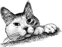 一只观看的家猫的剪影 库存图片