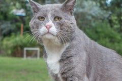 一只辞职的老猫 免版税库存图片