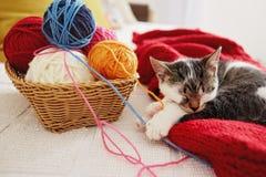 一只逗人喜爱的可爱的小猫在沙发睡觉 免版税库存图片