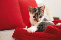 一只逗人喜爱的可爱的小猫坐沙发 库存图片