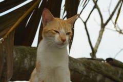 一只逗人喜爱的困矮小的公猫 选择聚焦,被弄脏的背景 库存照片